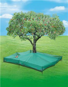 Fruit collection net 6.25 m²