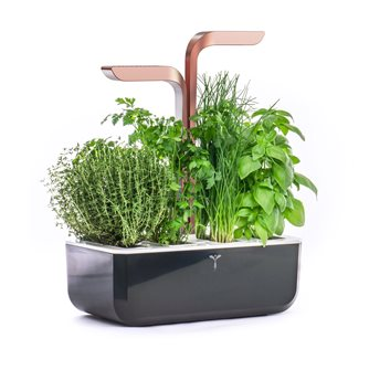 Copper Smart Copper Realty Productive Indoor Vegetable Garden