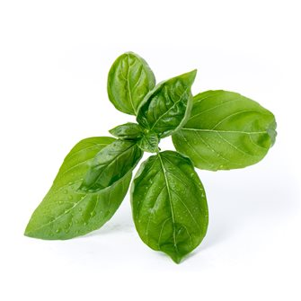 Basil Large Green Refill Ingot for Vegetable Garden