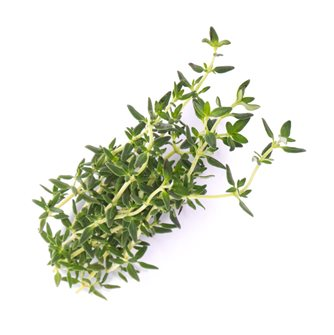 Thyme refill ingot for vegetable garden