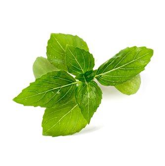 Cinnamon basil Refill Ingot for vegetable garden Genuine