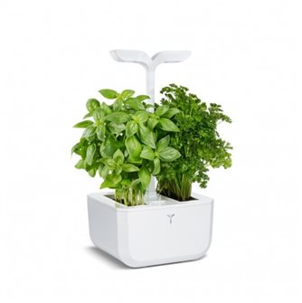 Vegetable compact Exky Indoor Classic White Real