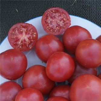 Bernese pink tomato seeds
